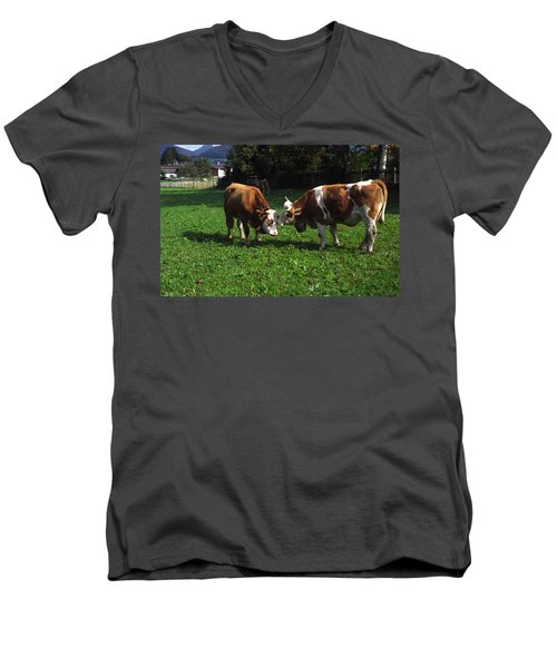 Cows Nuzzling Men's V-Neck T-Shirt by Sally Weigand