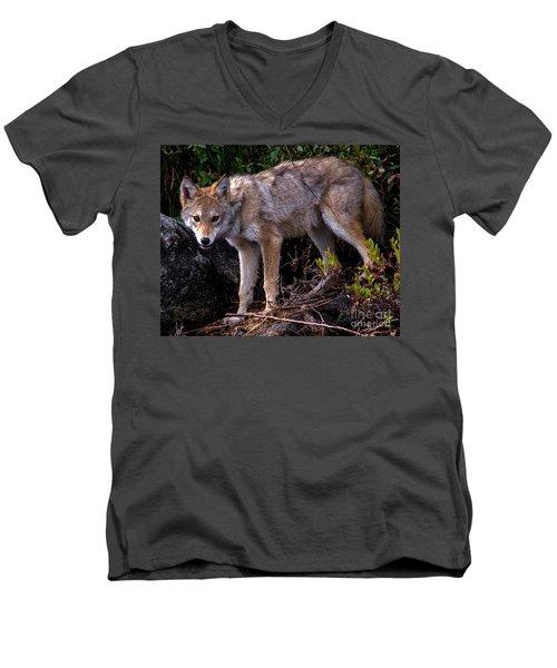 Coyote Portrait Men's V-Neck T-Shirt