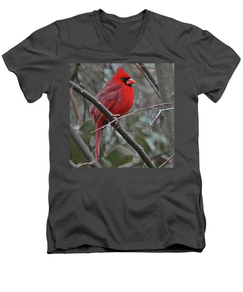 Crimson Cardinal Men's V-Neck T-Shirt