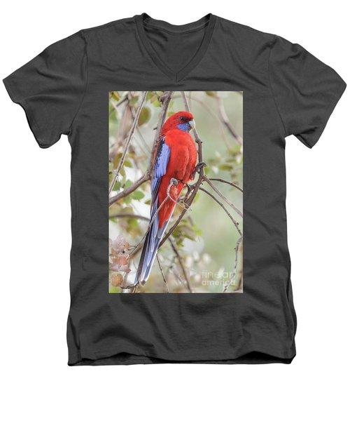 Crimson Rosella 01 Men's V-Neck T-Shirt