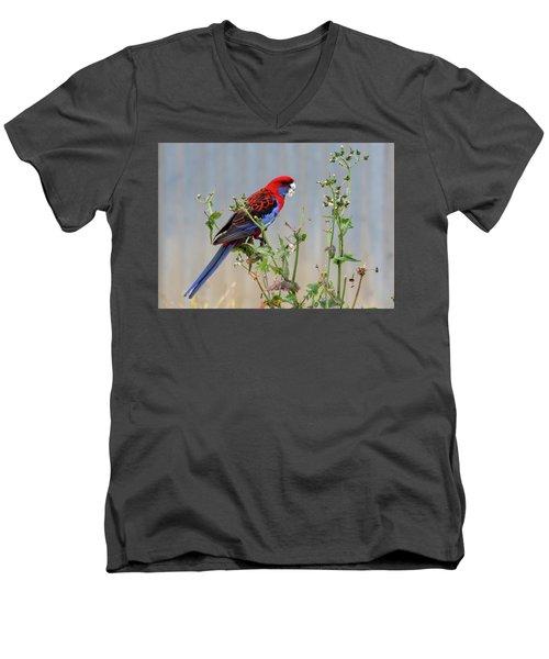 Crimson Rosella Men's V-Neck T-Shirt