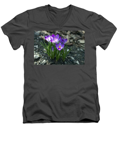 Crocus In Bloom #2 Men's V-Neck T-Shirt by Jeff Severson