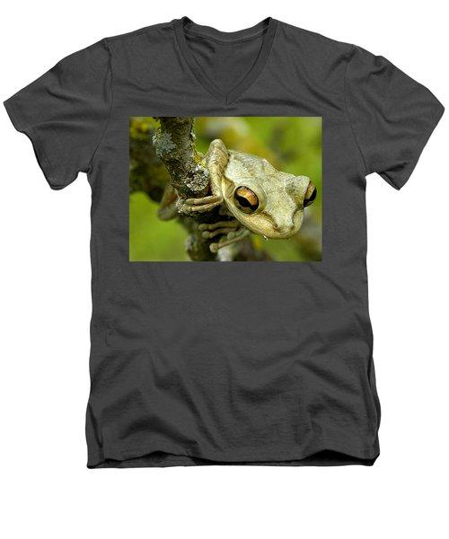 Cuban Tree Frog  Men's V-Neck T-Shirt by Chris Mercer