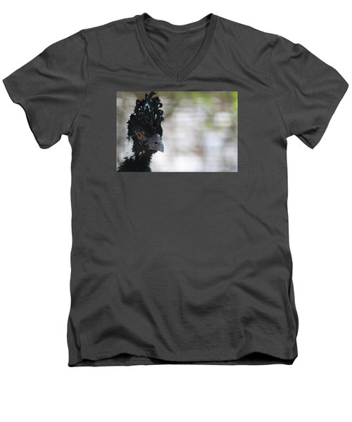 Curassow Men's V-Neck T-Shirt
