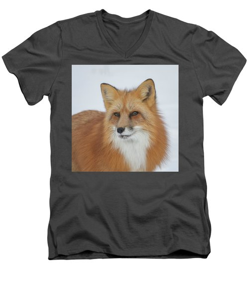 Curious Fox Men's V-Neck T-Shirt by Jack Bell