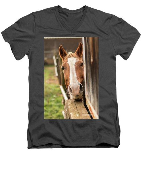 Curious Horse Men's V-Neck T-Shirt