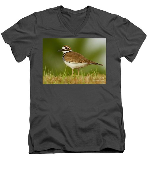 Curious Killdeer Men's V-Neck T-Shirt