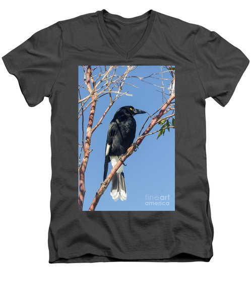 Currawong Men's V-Neck T-Shirt