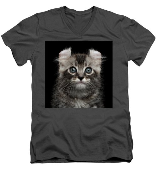 Cute American Curl Kitten With Twisted Ears Isolated Black Background Men's V-Neck T-Shirt