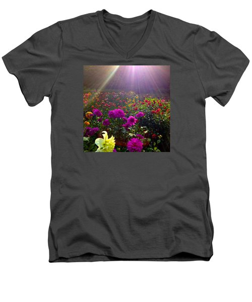 Dahlias Kissed By Sun-rays  Men's V-Neck T-Shirt