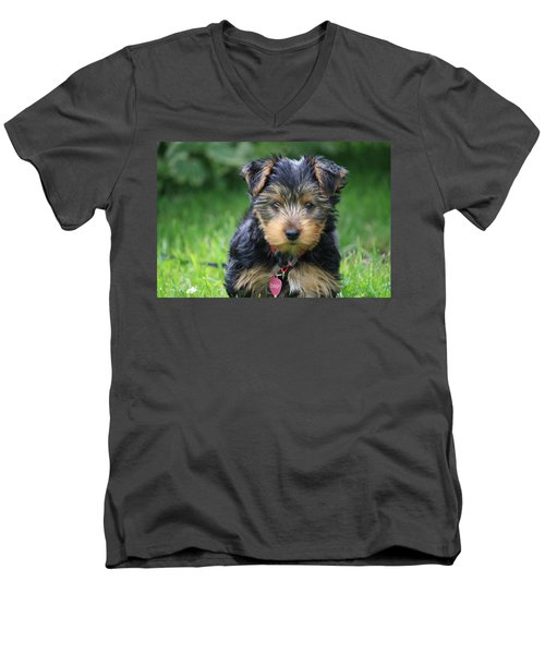 Daisy Men's V-Neck T-Shirt by Mary-Lee Sanders