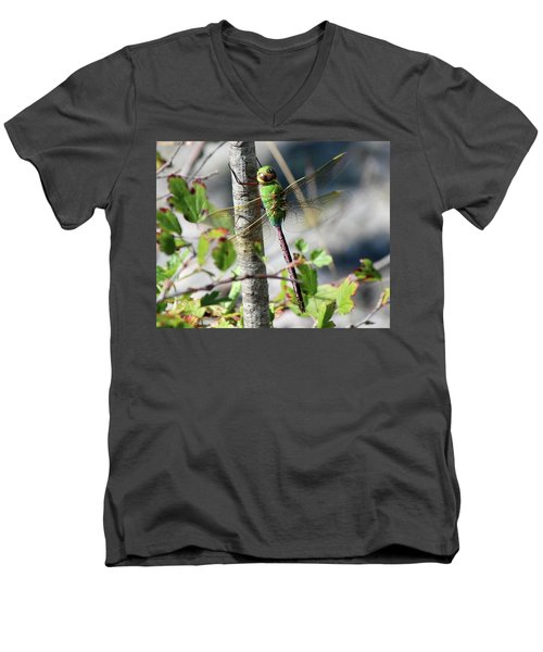 Darner Men's V-Neck T-Shirt
