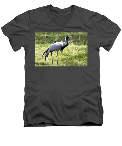 Men's V-Neck T-Shirt featuring the photograph Demoiselle Crane by Teresa Zieba