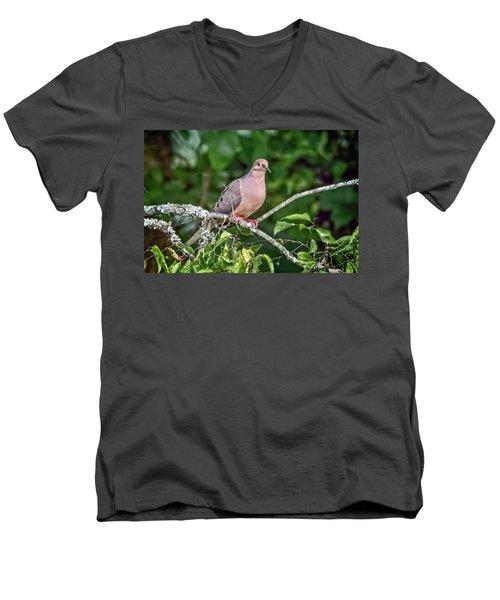 Dove On A Branch Men's V-Neck T-Shirt