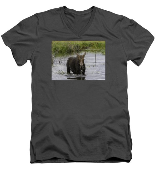 Drooling Cow Moose Men's V-Neck T-Shirt by Elizabeth Eldridge