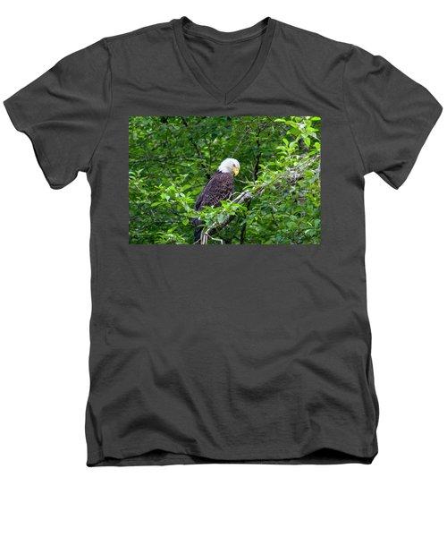 Eagle In The Tree Men's V-Neck T-Shirt