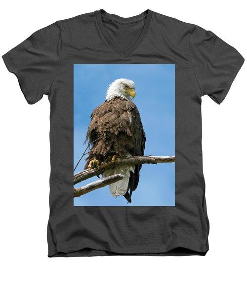 Eagle On Perch Men's V-Neck T-Shirt