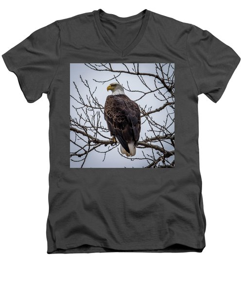 Men's V-Neck T-Shirt featuring the photograph Eagle Perched by Paul Freidlund