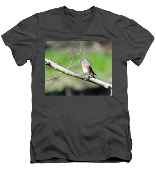Eastern Bluebird Men's V-Neck T-Shirt by George Randy Bass