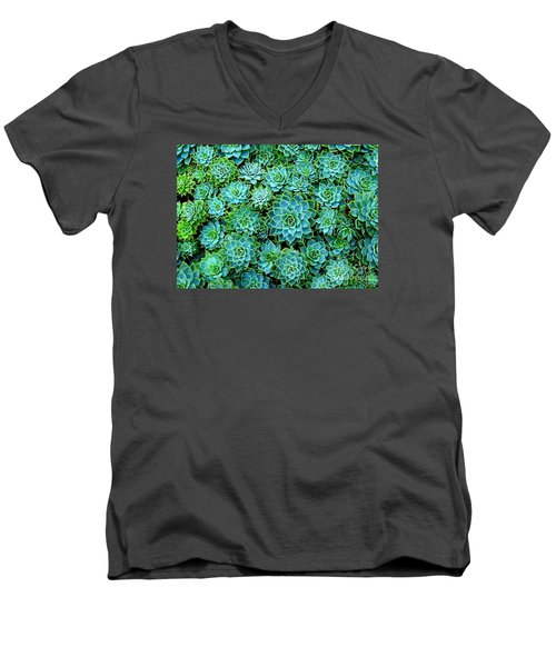 Men's V-Neck T-Shirt featuring the photograph Echeveria 2 by Ranjini Kandasamy