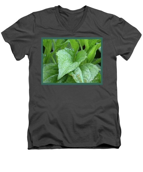 Echinacea After The Rain I Men's V-Neck T-Shirt