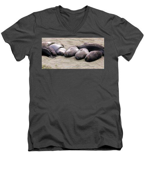Elephant Seals Men's V-Neck T-Shirt