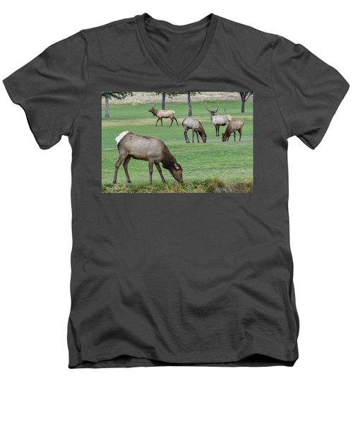 Elk On Golf Course Estes Park Colorado Men's V-Neck T-Shirt