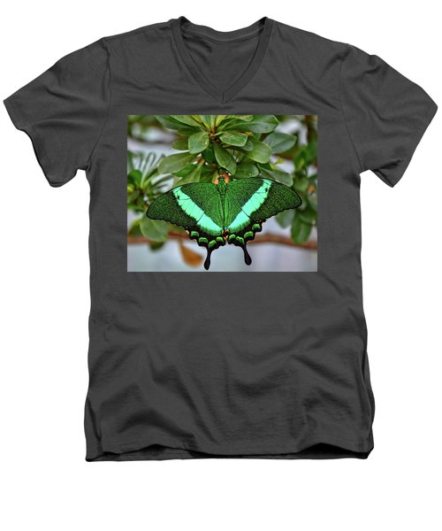 Emerald Swallowtail Butterfly Men's V-Neck T-Shirt by Ronda Ryan