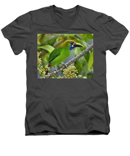 Emerald Toucanet Men's V-Neck T-Shirt