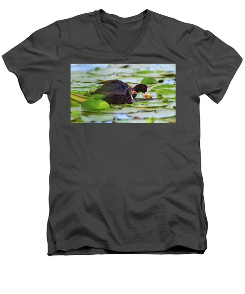 Eurasian Or Common Coot, Fulicula Atra, Duck And Duckling Men's V-Neck T-Shirt