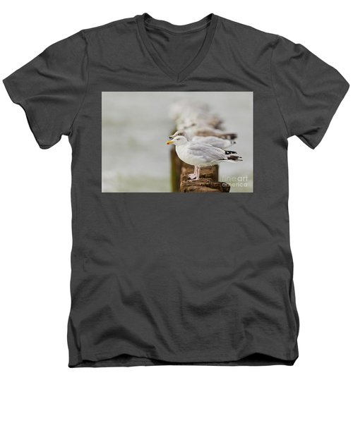 European Herring Gulls In A Row Fading In The Background Men's V-Neck T-Shirt