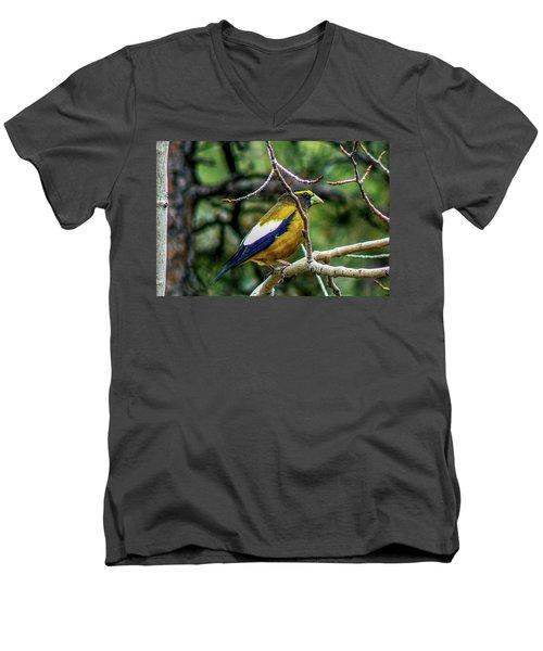 Evening Grosbeak On Aspen Men's V-Neck T-Shirt by Marilyn Burton
