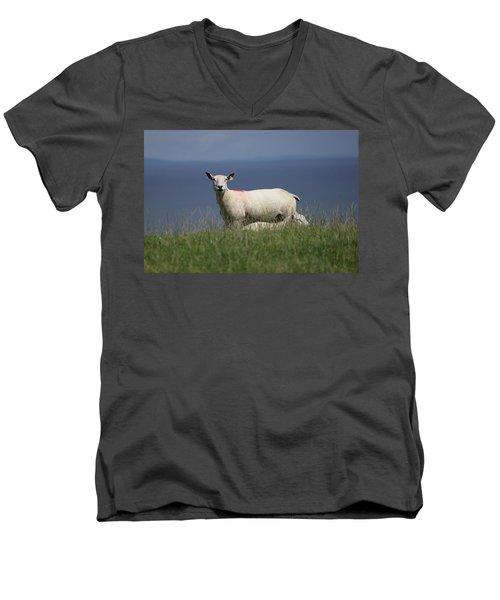 Ewe Guarding Lamb Men's V-Neck T-Shirt