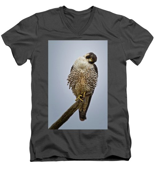 Falcon With Cocked Head Men's V-Neck T-Shirt