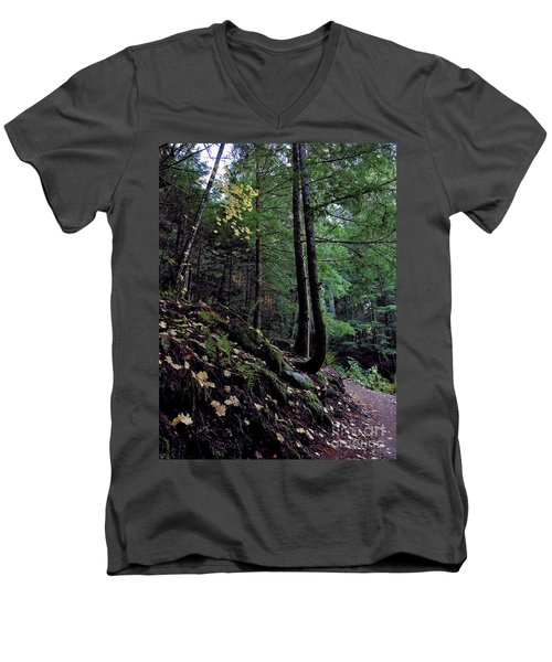 Fall Forest Men's V-Neck T-Shirt