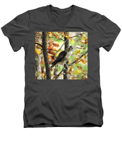 Fall Red-tailed Hawk Men's V-Neck T-Shirt