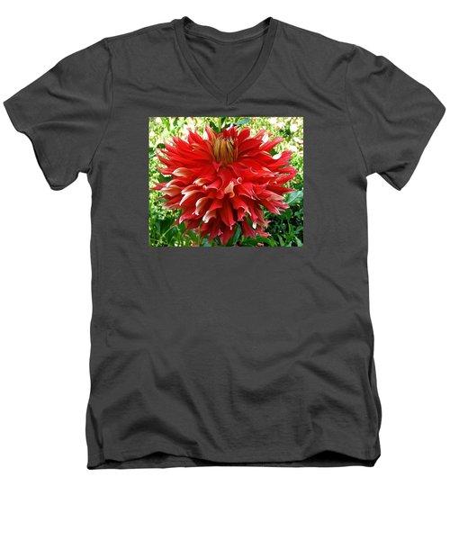 Fancy Red Dahlia Men's V-Neck T-Shirt