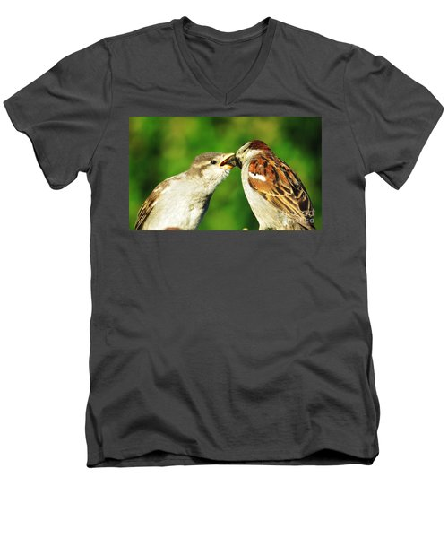 Feeding Baby Sparrow 3 Men's V-Neck T-Shirt by Judy Via-Wolff