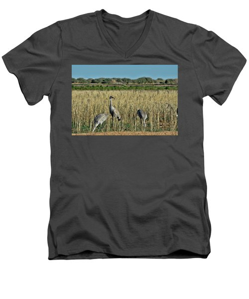 Feeding Greater Sandhill Cranes Men's V-Neck T-Shirt