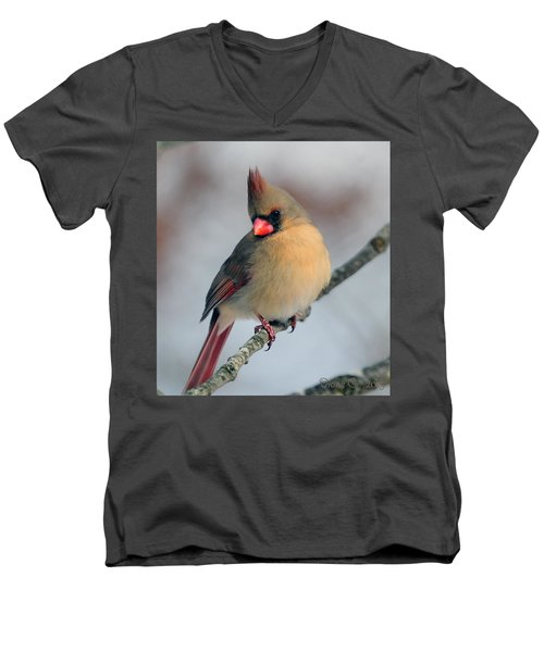 Female Cardinal Men's V-Neck T-Shirt by Diane Giurco