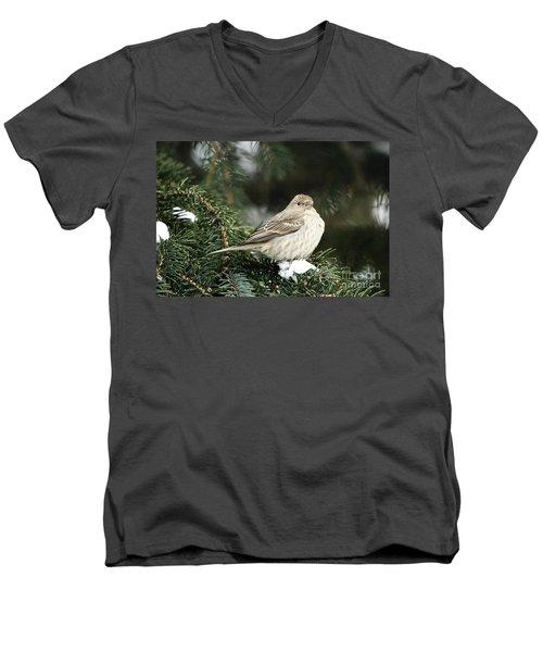 Female House Finch On Snow Men's V-Neck T-Shirt