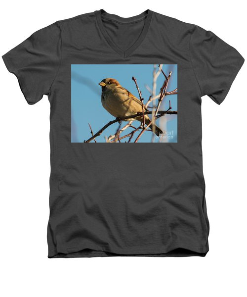 Female House Sparrow Men's V-Neck T-Shirt by Mike Dawson