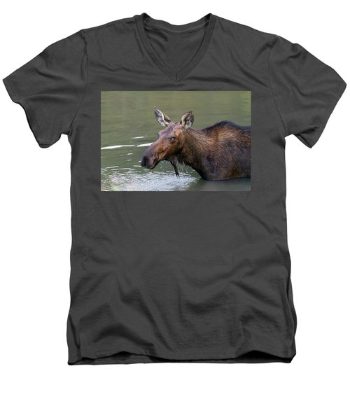 Men's V-Neck T-Shirt featuring the photograph Female Moose Head by James BO Insogna