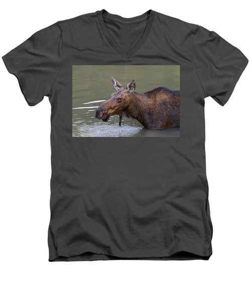 Men's V-Neck T-Shirt featuring the photograph Female Moose Head Shot by James BO Insogna