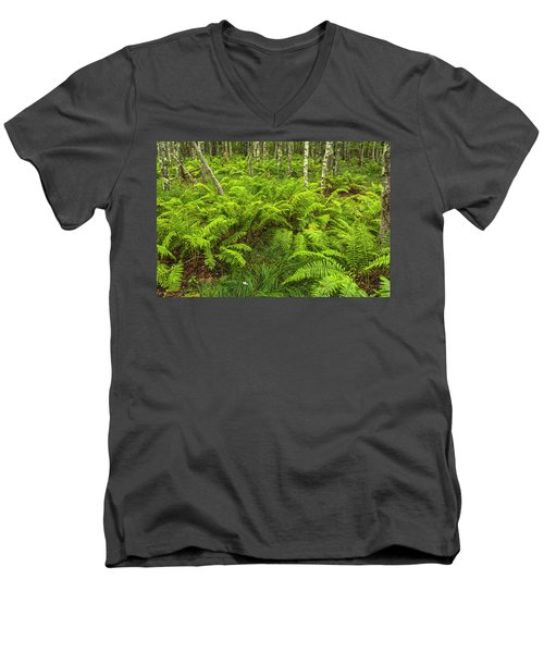 Ferns And Birch In Soft Light Men's V-Neck T-Shirt