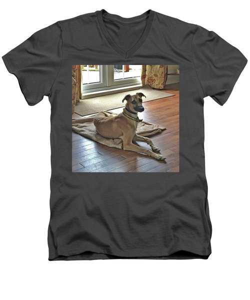 Finly - Ava The Saluki's New Companion Men's V-Neck T-Shirt