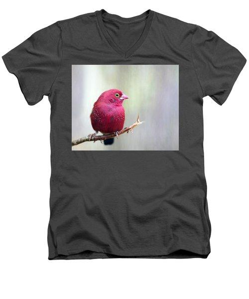 Fire Finch Men's V-Neck T-Shirt by Marion Cullen