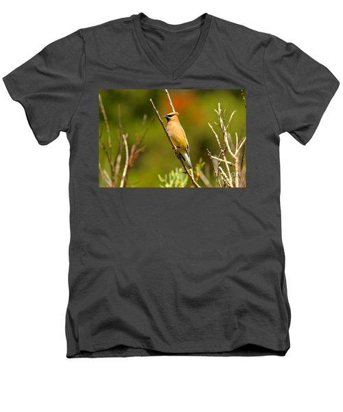 Fishercap Cedar Waxwing Men's V-Neck T-Shirt by Adam Jewell