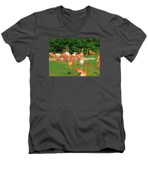 Flamingo Sunbathe Men's V-Neck T-Shirt