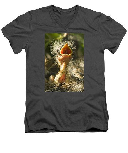 Fledgling Yellow Warbler Men's V-Neck T-Shirt